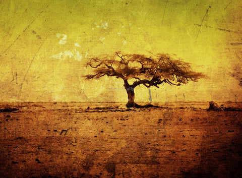 Wall Art, The Beauty Of The Barren Tree, - PosterGully