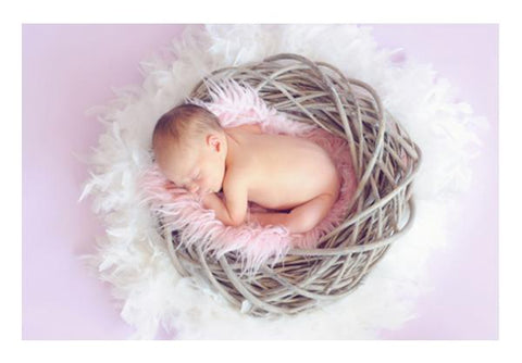 Baby Sleeping In Nest  Wall Art PosterGully Specials