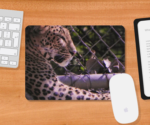 Mousepad, Big Cat at Delhi zoo Mousepad | Artist : Amrit Singh, - PosterGully