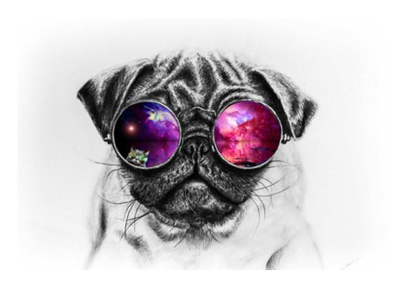 https://www.postergully.com/products/pawsitive-vibes-only-wall-art ...