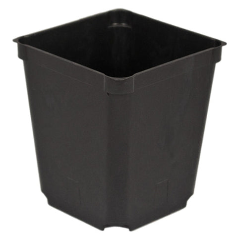 "3.5"" Square Perennial Pot (Case of 500)"