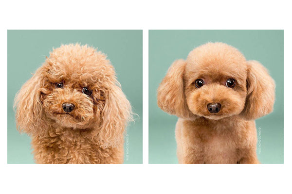 Adorable Dogs Before and After Makeovers