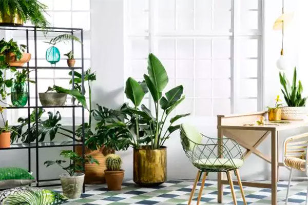 Local Plant Brands To Brighten Up Your Space