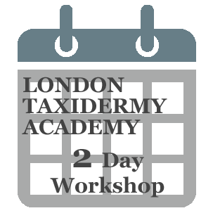 Large Specimens Taxidermy  Weekend Workshop London Event Class 2Day