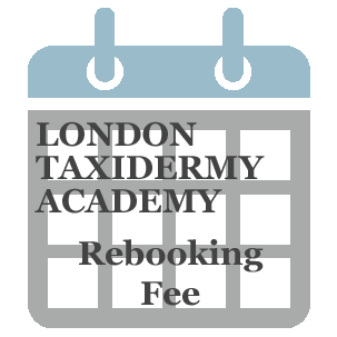 Rebooking Fee Butterfly Preservation, Small & Medium Specimens Workshop