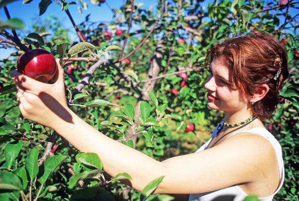 Apple Picking is Good for Your Health