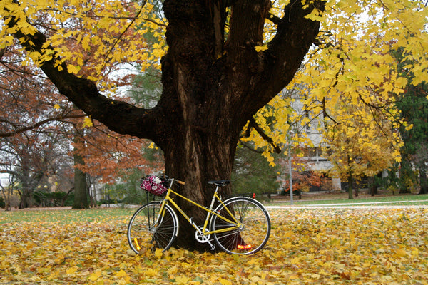 Fun fall activities - bike riding