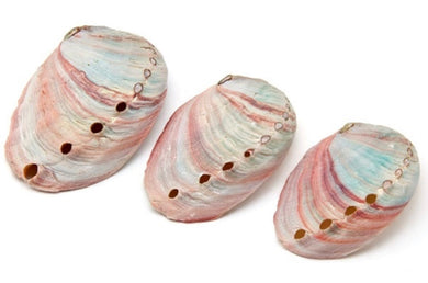 3 Pc Abalone Shell Set