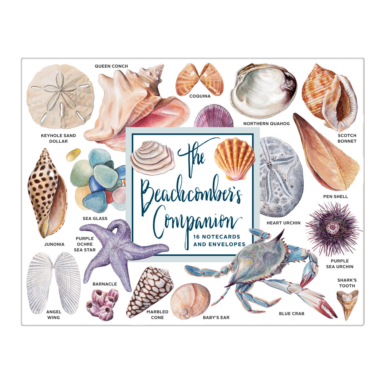 The Beachcomber's Companion Notecards