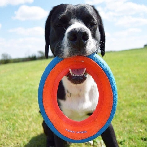Chuckit! Large Fetch Wheel Dog Toy