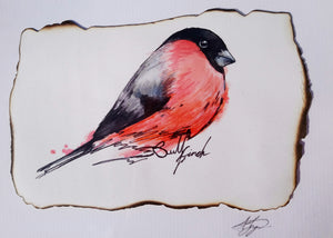 Bullfinch Bird - Original Artwork