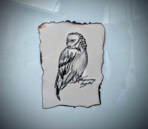 Tawny Owl - Original Artwork