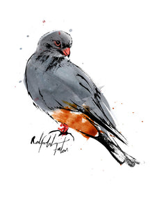 Red-footed Falcon Print