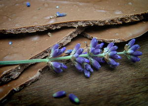 Milk Chocolate Lavender Shards
