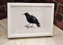 Starling Bird Painting - Original Artwork