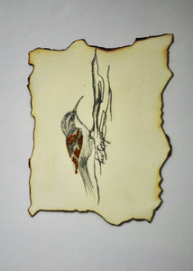Treecreeper Bird - Original Artwork