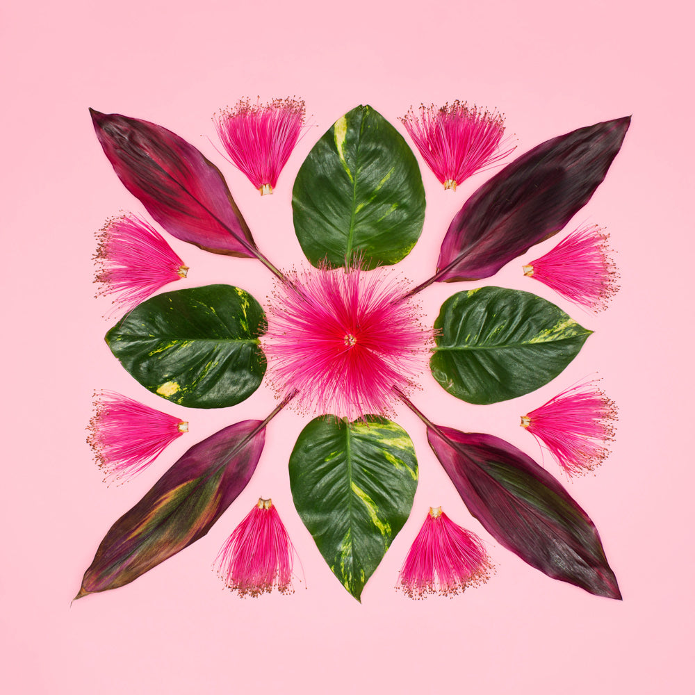 bombax flower photo with ivy and red pink ti leaf