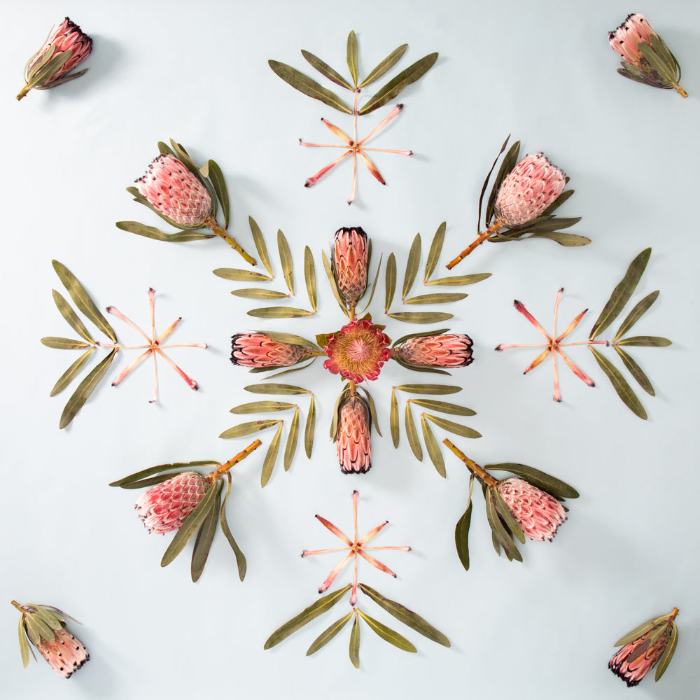 protea artwork with hawaiian quilt style design