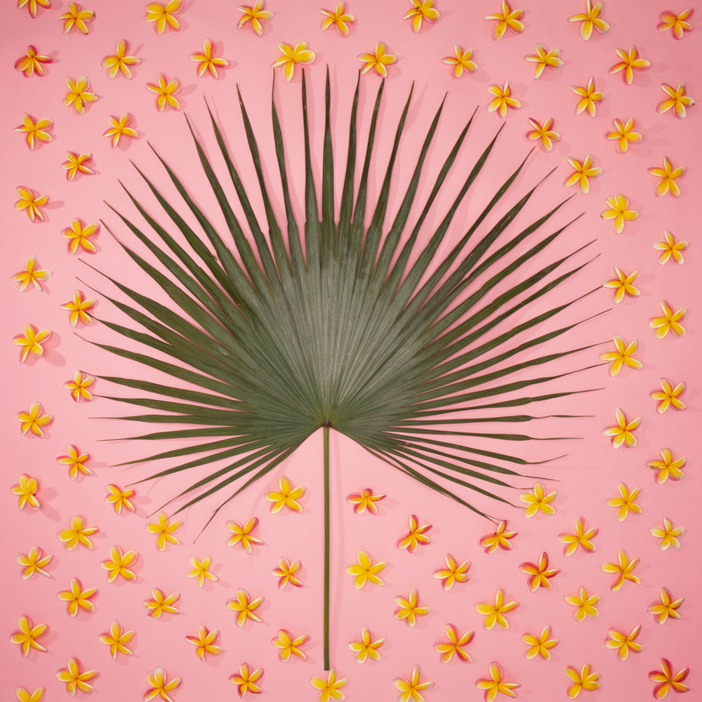 hawaiian art with fan palm plumeria on a pink background