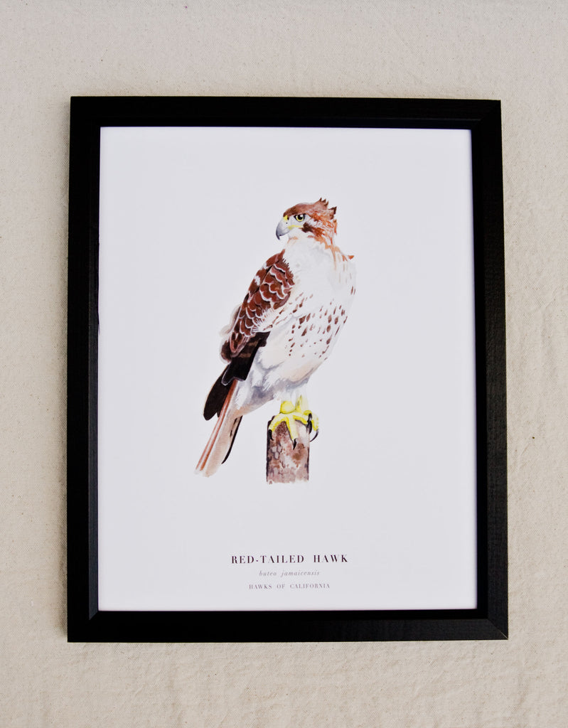 Hawks of California Print