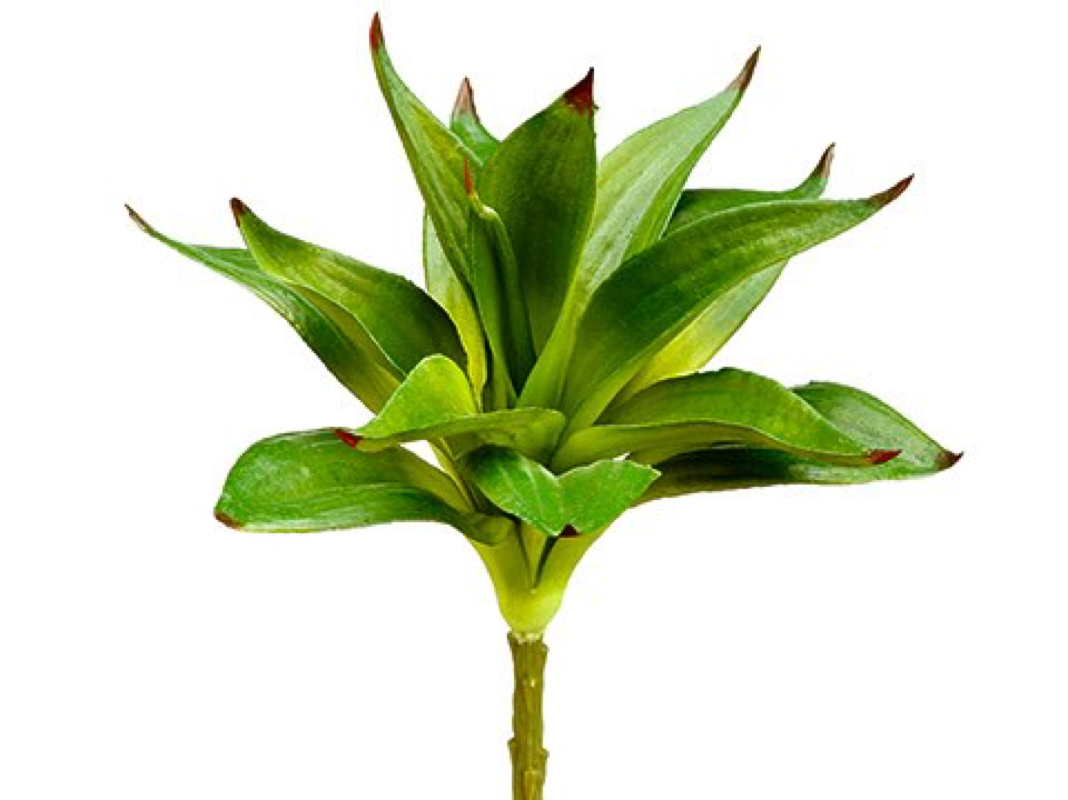 "10"" Dracaena Spray"
