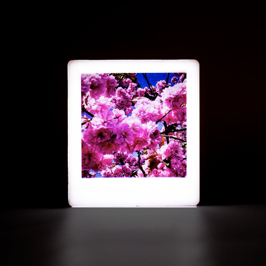 Mini Photo Light Box - Rose Gold