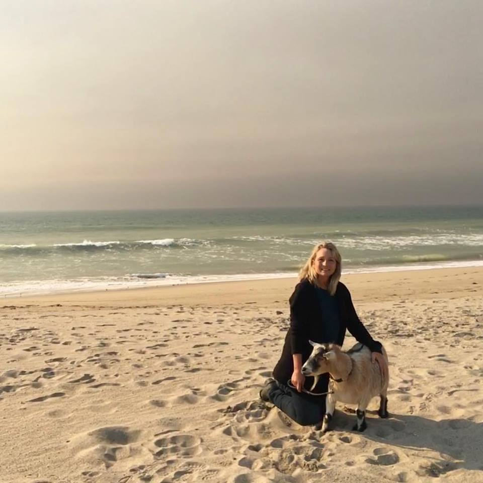 Jacob the Ojai goat made it to the beach during the Thomas Fire after escaping the flames with dav footwear co-founder Kerri Sengstaken