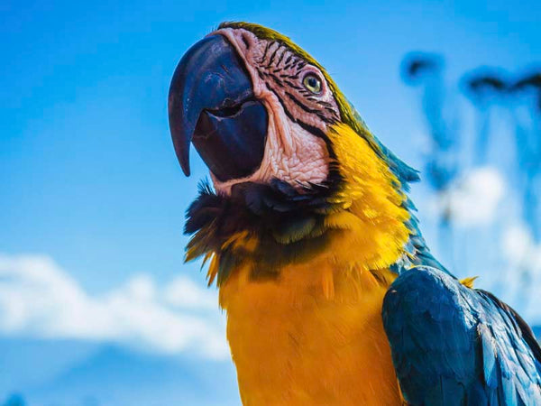 Psychology of Colour - Yellow Parrot