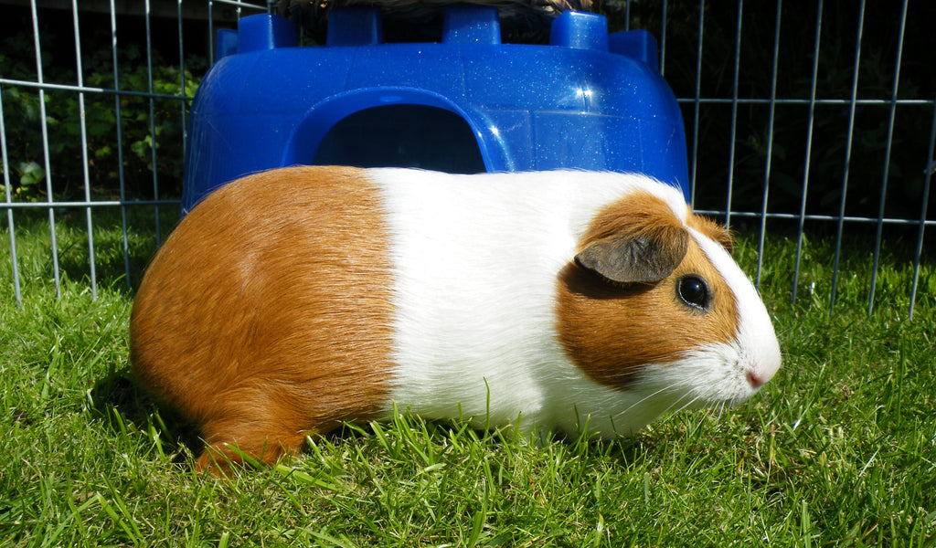 Is Artificial Grass Safe For All Pets?