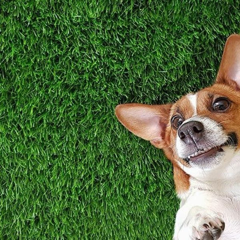 Artificial Grass Safe For Pets