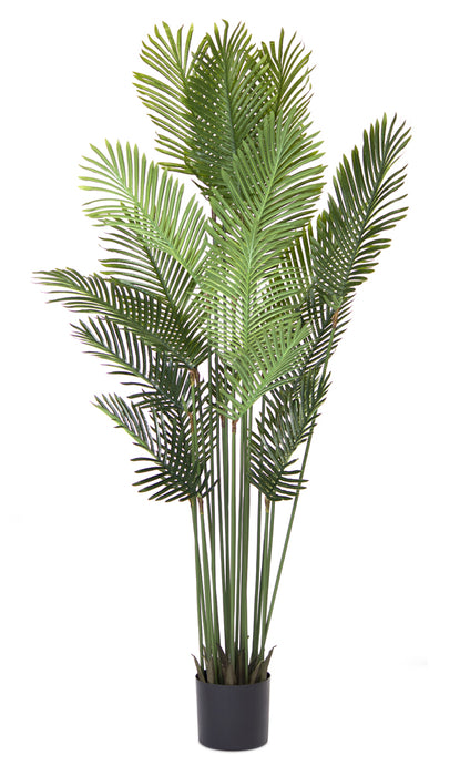 Palm Tree Potted 6'H Polyester