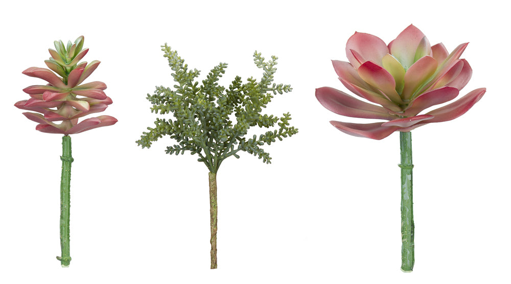 "Succulent (Set of 12) 7.75""H, 8""H, 8.5""H Plastic"