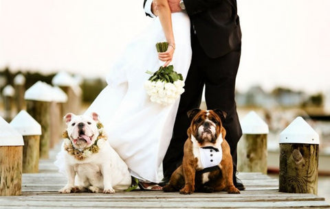 Dogs all dressed up for the wedding in tux and flowers