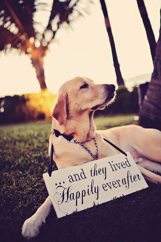 and they lived happily ever after with dog at wedding
