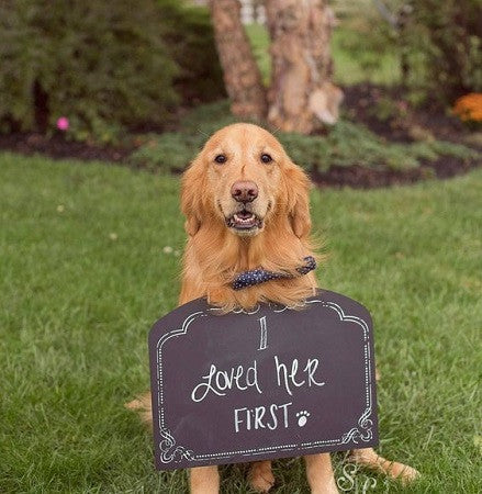 I loved her first Dog at wedding