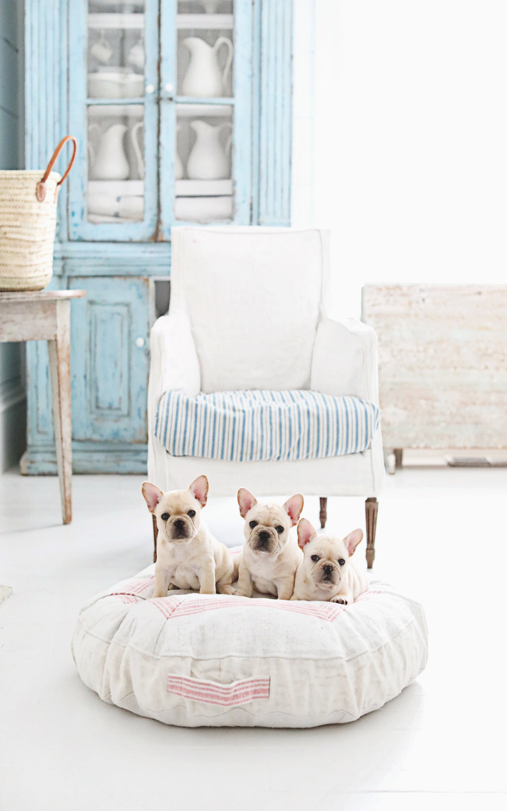 Pink Striped Dog Bed