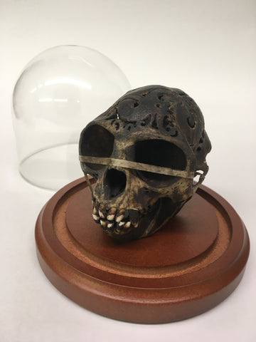 Dayak Carved Monkey Skull in Glass Dome - Macaca fascicularis