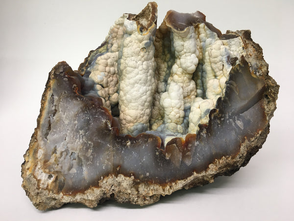 "Fossil Agatized Coral 9"" - species undetermined"