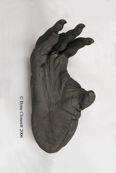 Orangutan right Foot (Sumatran - male) Life Cast Replica - Pongo abelii #LC-08