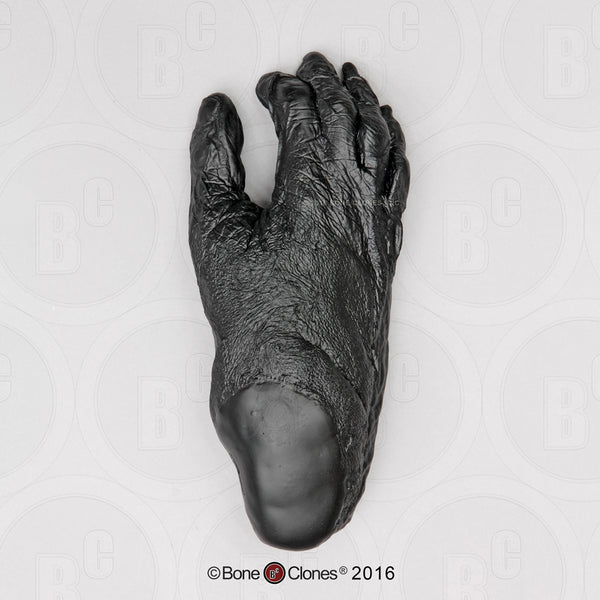 Bonobo Foot Life Cast Replica - Pan paniscus #LC-29