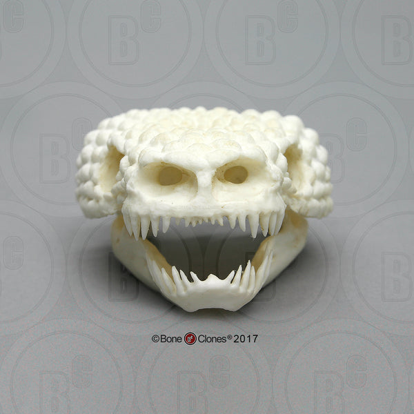 Lizard Skull (Gila Monster) Cast Replica - Heloderma suspectum #BC-006