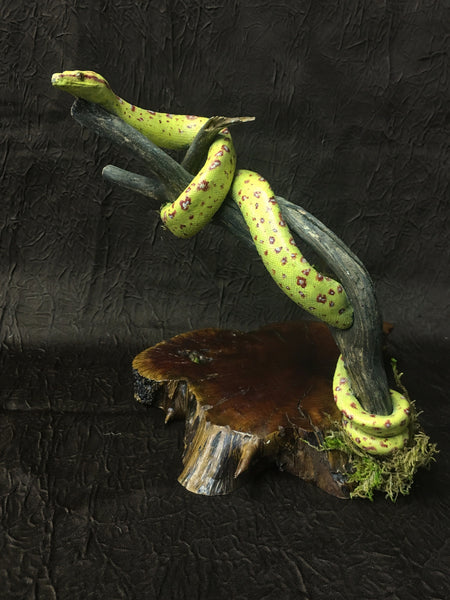 Green Tree Python Taxidermy - Morelia viridis