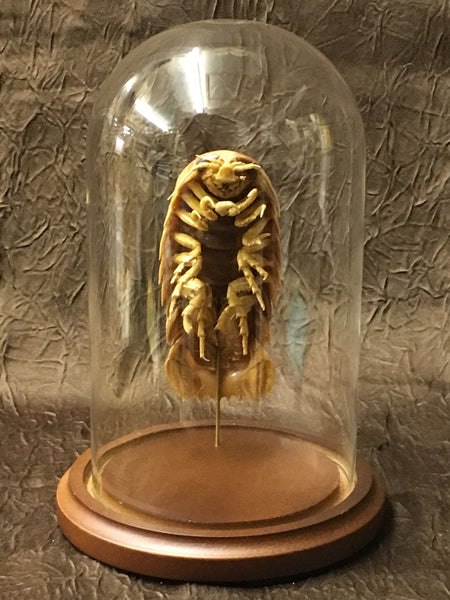 Giant Isopod in Glass Dome - Bathynomus sp.