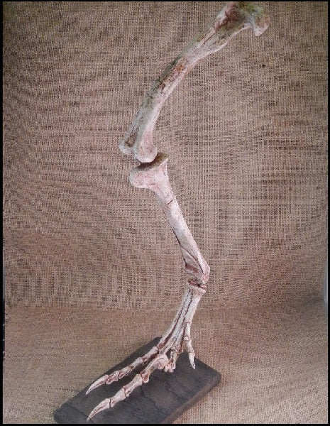 "Cast Replica Velociraptor Leg & Foot w/ Claws 19"" (small dromaeosaurid ""raptor"" dinosaur)"