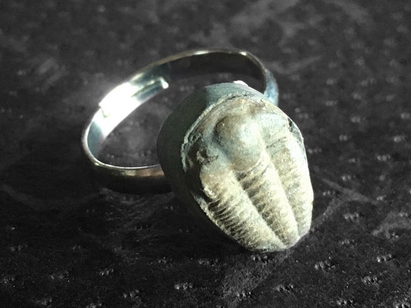 Trilobite Ring - #1