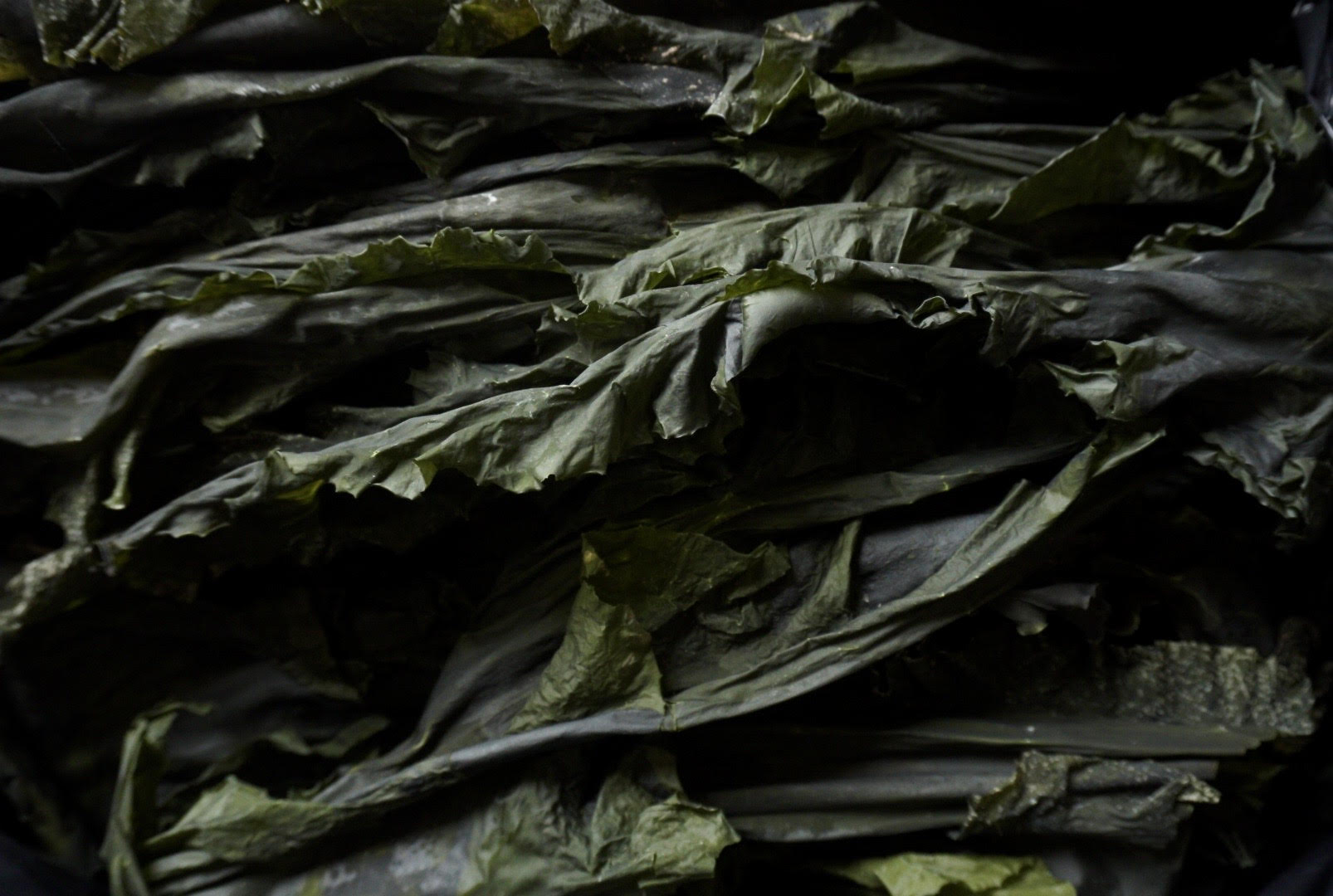 whole leaf sugar kelp
