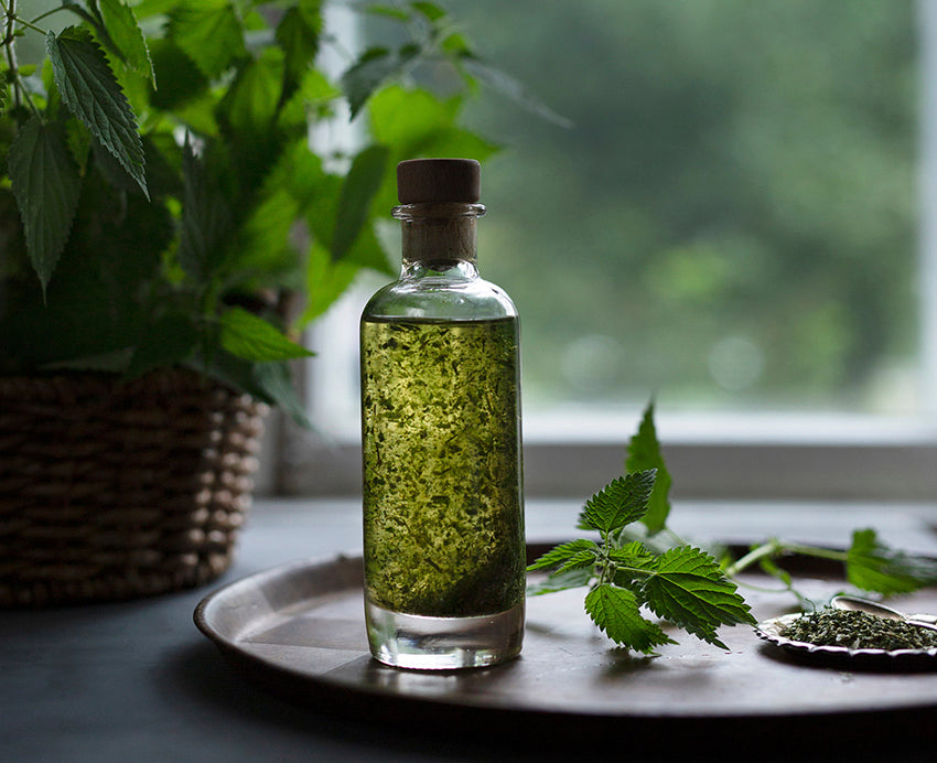 Nettle Salad Dressing