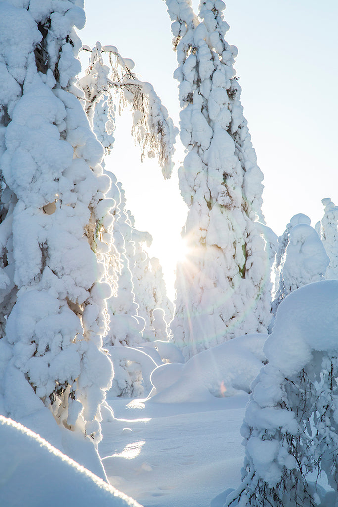 FINLAND FOREST WINTER