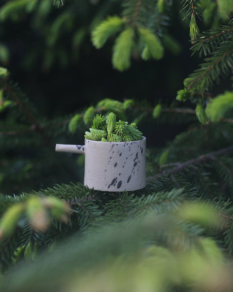 spruce sprouts