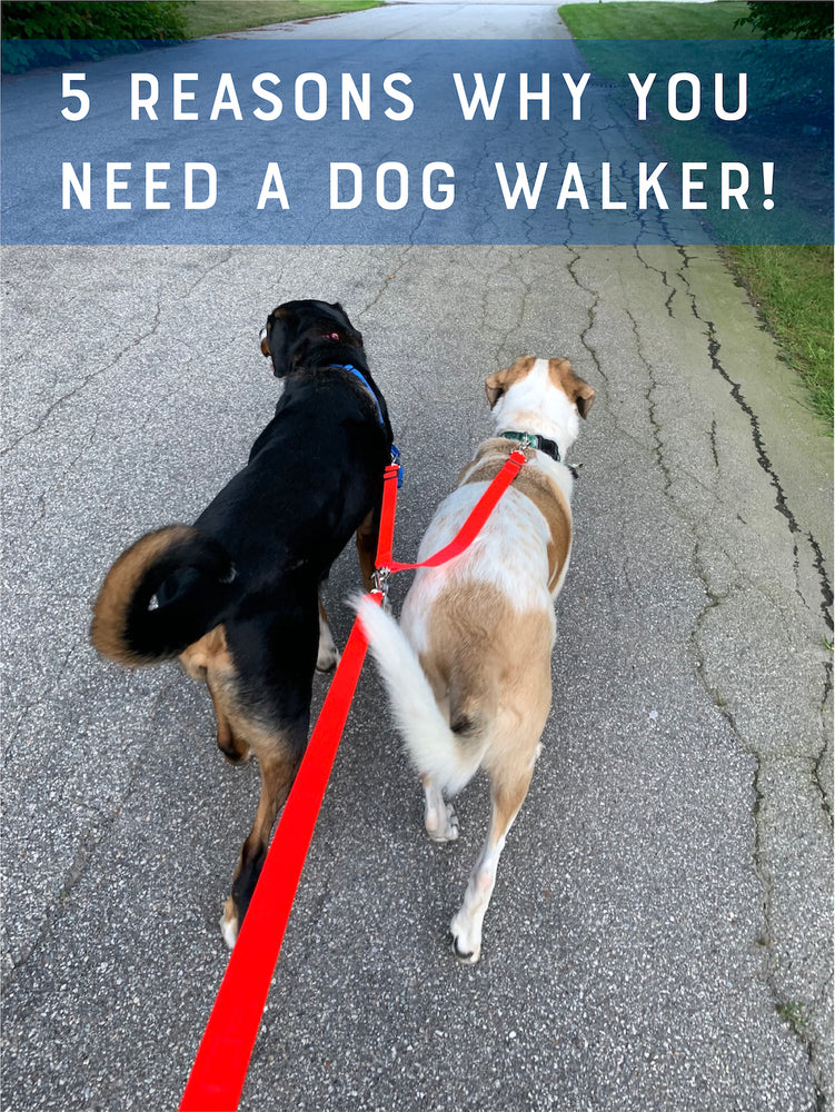 5 Reasons Why You Need A Dog Walker